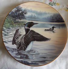 MORNING LIGHT: COMMON LOONS PLATE  BIRDS OF THE NORTH  COA