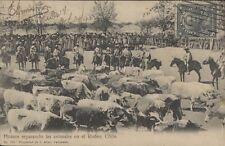 CHILE HUASOS SEPARANDO LOS ANIMALES EN EL RODEO ED. ALLAN N° 155