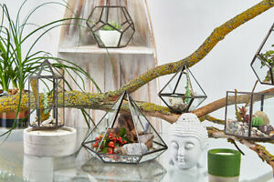 Glass & Brass Terrarium Plant Vase Stylish Designs Lantern Pentagon Diamond