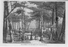 1866 Antique Print - South WestFrance Landes Resin Gathering Pine Forests  (153)