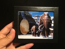 Boite vitre verre avec véritable Poils de Mammouth / Wooly mammoth hair box !