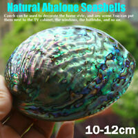 10-12cm Seashell Abalone Shell Smudging Beach House Decor Natural Rainbow Gift