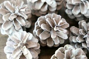 Decorative Pine Cones - Textured Snow Spray
