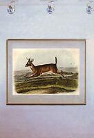 Audubon White-Tailed Deer Male 15x22 Hand Numbered Ltd. Edition Art Print