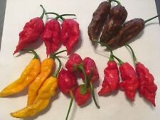 5 STRAIN EXTREME HEAT COMBO! RARE PEPPER SEEDS -PERFECT STOCKING STUFFER FOR DAD