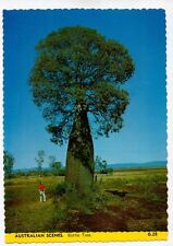 E1503cgt Australia Queensland Bottle Tree postcard