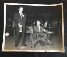 Vintage Dog Show Champion Winner Press Photo Gordon Setter English Irish Pointer
