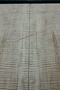 AAA+ Fiddleback Ambrosia Spalted Maple bookmatched carved guitar top 24mm S2
