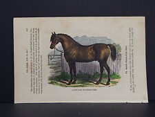 Horses, c.1890 A Good Form For Saddle Horse #36