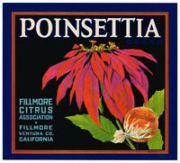 ORIGINAL POINSETTIA ORANGE CRATE LABEL FILLMORE VINTAGE XMAS CHRISTMAS C1930S