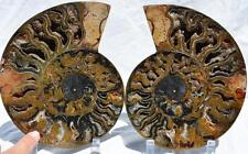 "1628xnx RARE 1 in 100 BLACK Ammonite PAIR Deep Crystals XXL 8.1"" 110myo 205mm"