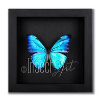 Morpho aurora aureola Echter Schmetterling im Holzrahmen 16x16 Taxidermy BLACK