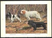 SPANIELS Cocker - Clumber - Field  Dog Print Fuertes 1927