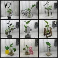 Hydroponic Vase & Stand - Unusual Gift - Grow Indoor Plants No Soil Needed!