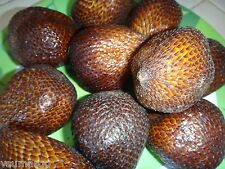 8pcs Tropical Salacca / Salak / Snake Fruit Seeds