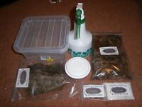 TROPICAL GREY WOODLICE CULTURE & START UP KIT- BIO-ACTIVE CLEAN-UP CREW