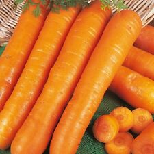 Kings Seeds-Semi di carote Early Nantes-COLTIVATORE Pack - 10000 Semi