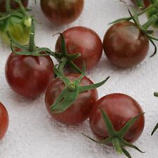 25 Graines de Tomate Black Cherry Non Traité seeds plantes légumes ancien rare