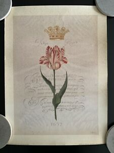 """Tulipa Royale 1652"" Signed Lithograph Print by Shelley Hely"