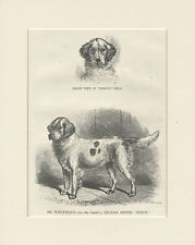 ENGLISH SETTER OLD TYPE ANTIQUE 1867 NAMED DOG PRINT ENGRAVING READY MOUNTED