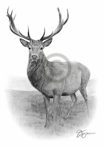 STAG pencil drawing art print A3 / A4 sizes signed UK artwork Deer