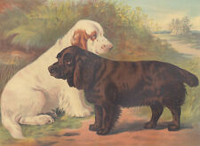 Clumber Spaniel Dog And Sussex Spaniel Dog Antique Dog Lithograph Art Print 1881