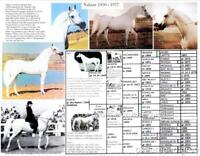 Polish Arabian Horse NABORR Picture Pedigree chart 11 X 8.5