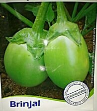 Brinjal Green Baingan 25 Seeds All Pincode Shipping