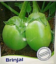 Brinjal Green Baingan 25 Seeds All Pincode Shipping