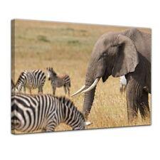 Leinwandbild - Afrika ( Zebra und Elefant)