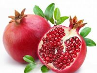 3 Pieces Pomegranates Tree GRAFTED, Direct Grower,гранатовый,nar tinq,رمان