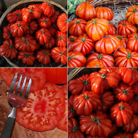 50 Pcs Hot Rare Sweet Tomato Fruit Vegetable Seeds Home Garden Plant Decor Call