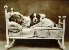 DOG MAMA AND HER CHILD IN THE BED Modern postcard Russian