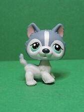 #- chien dog Husky puzzle special edition blue eyes LPS Littlest Pet Shop Figure