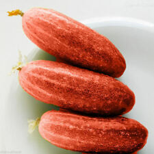 100pcs Red Cucumber Seeds Fruit Vegetables Seeds Rare Garden Plants