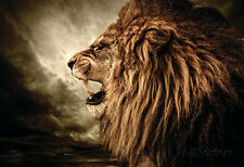 Roaring Lion Against Stormy Sky Poster Print, 19x13