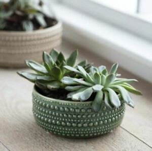 Green Textured Ceramic Bowl Planter, Glazed Round Bulb Succulent Pot, Castello M
