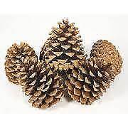 1kg Pine Cones Silver Austriaca Christmas Decorations Home Crafts SKU 4007