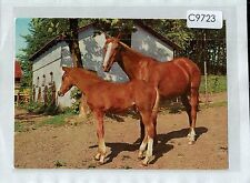 C9723cgt Chesnut Mare and Foal Kruger postcard