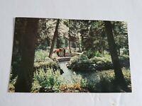 Clear lake Manitoba Postcard Vintage Unposted