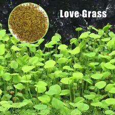 2 x Plant Seeds Fish Tank Aquarium love grass seed Plant