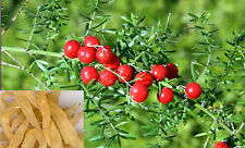 DR T&T Asparagus Tuber/ tian men dong 100g dry herb