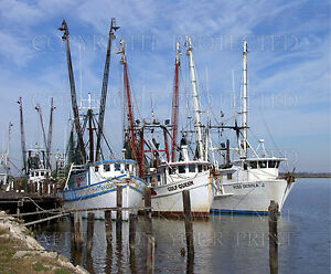 Apalachicola FL, shrimp boats fishing photo, CHOICE! 5x7 or request images on CD