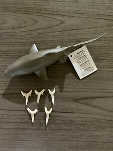 "Set of (5) 1"" Sand Tiger Shark Teeth with Safari LTD Replica toy shark kit"