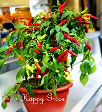 VEGETABLE - SWEET PEPPER  POUPILA - 50 SEEDS - Good for house plant - Ornamental