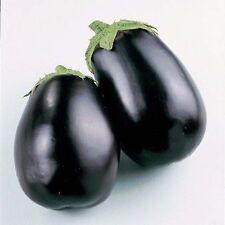 ORGANIC VEGETABLE  AUBERGINE  EGG PLANT  BLACK BEAUTY 200 SEEDS
