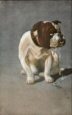 Sad Crying Bull Dog Bulldog c1910 Postcard