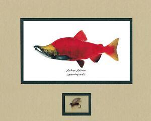 Joseph Tomelleri 5 -Salmon prints with fly