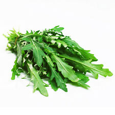 Rocket Salad Seed 100 Seeds Eruca Sativa Rucola Arugula Vegetable Seeds Hot D021