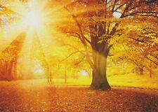 Ansichtskarte: Eiche in Sonnenlicht im Herbstwald - oak tree in autumn sunlight